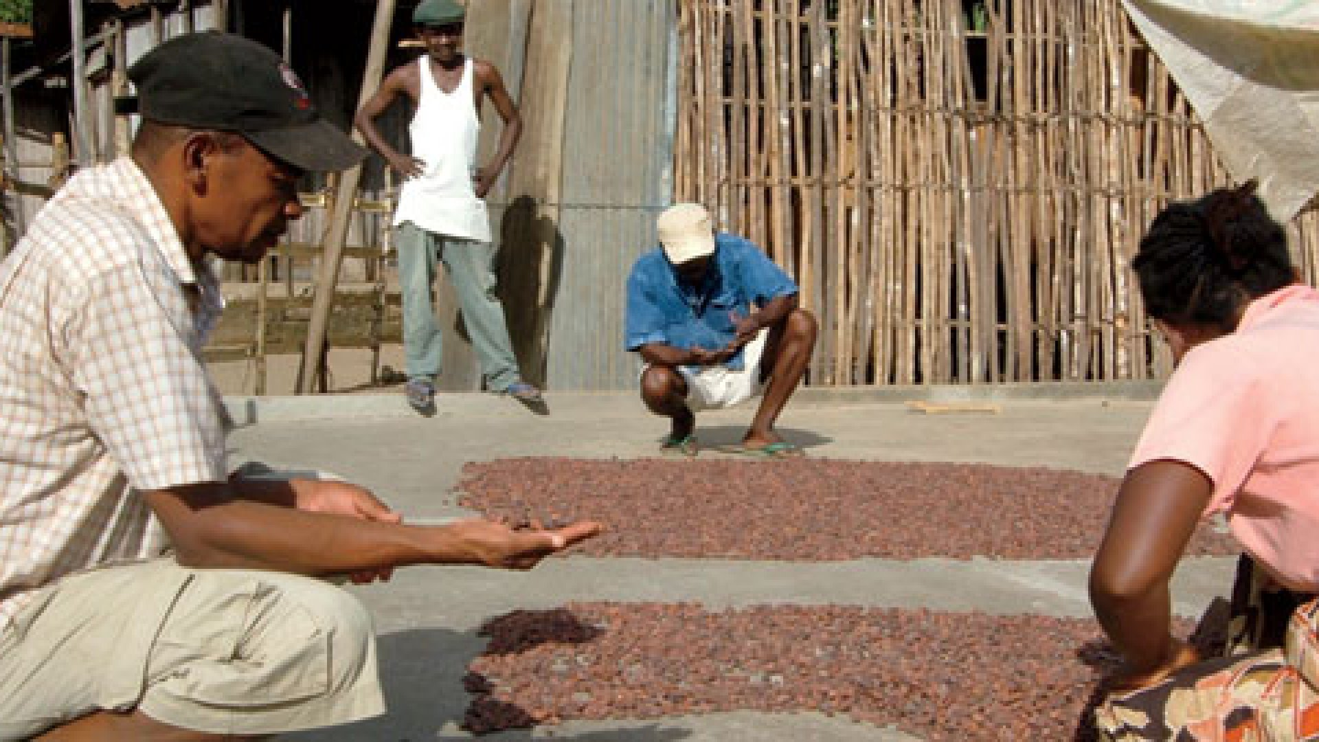 <strong>It Starts With the Bean</strong> Drying cacao in Madagascar.