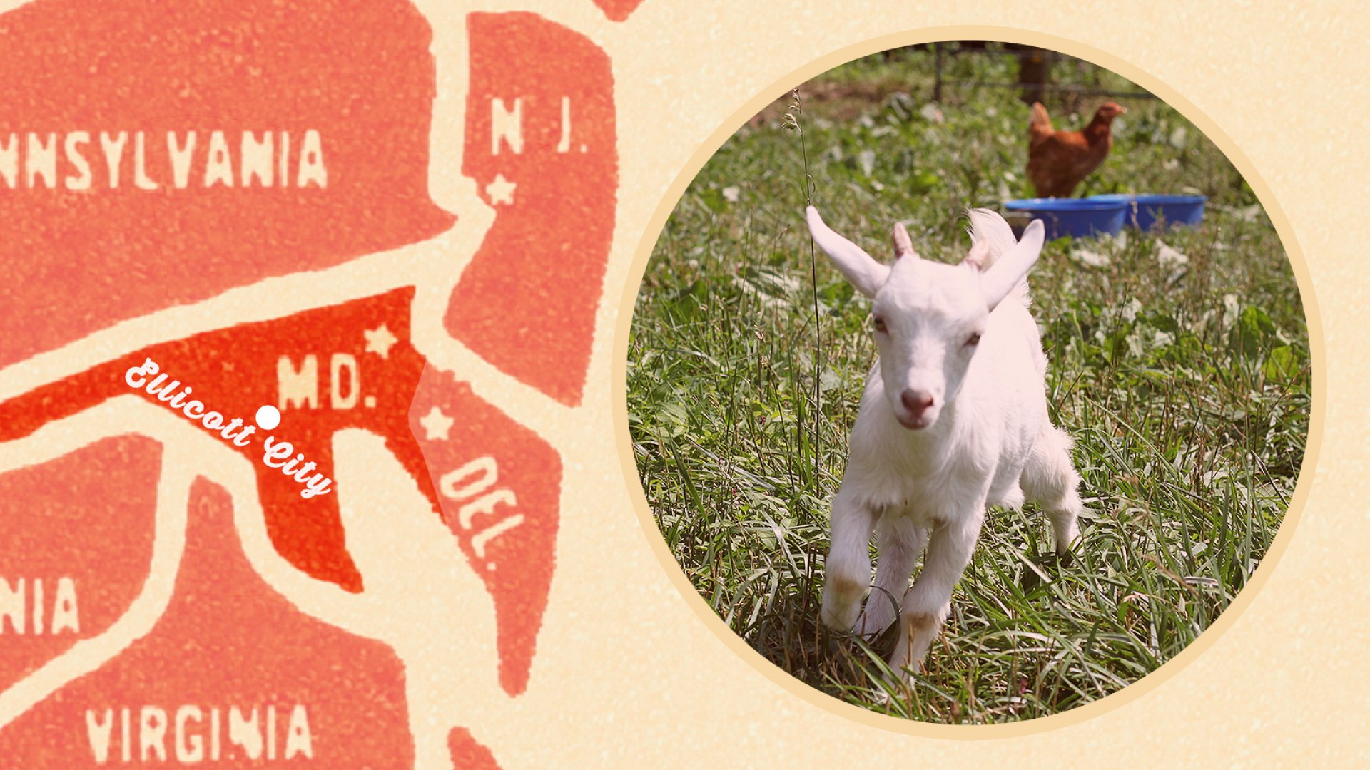 Enchanted Forest, Pygmy Goats, Cinderella's Coach: Meet the Quirkiest Family Business in Maryland