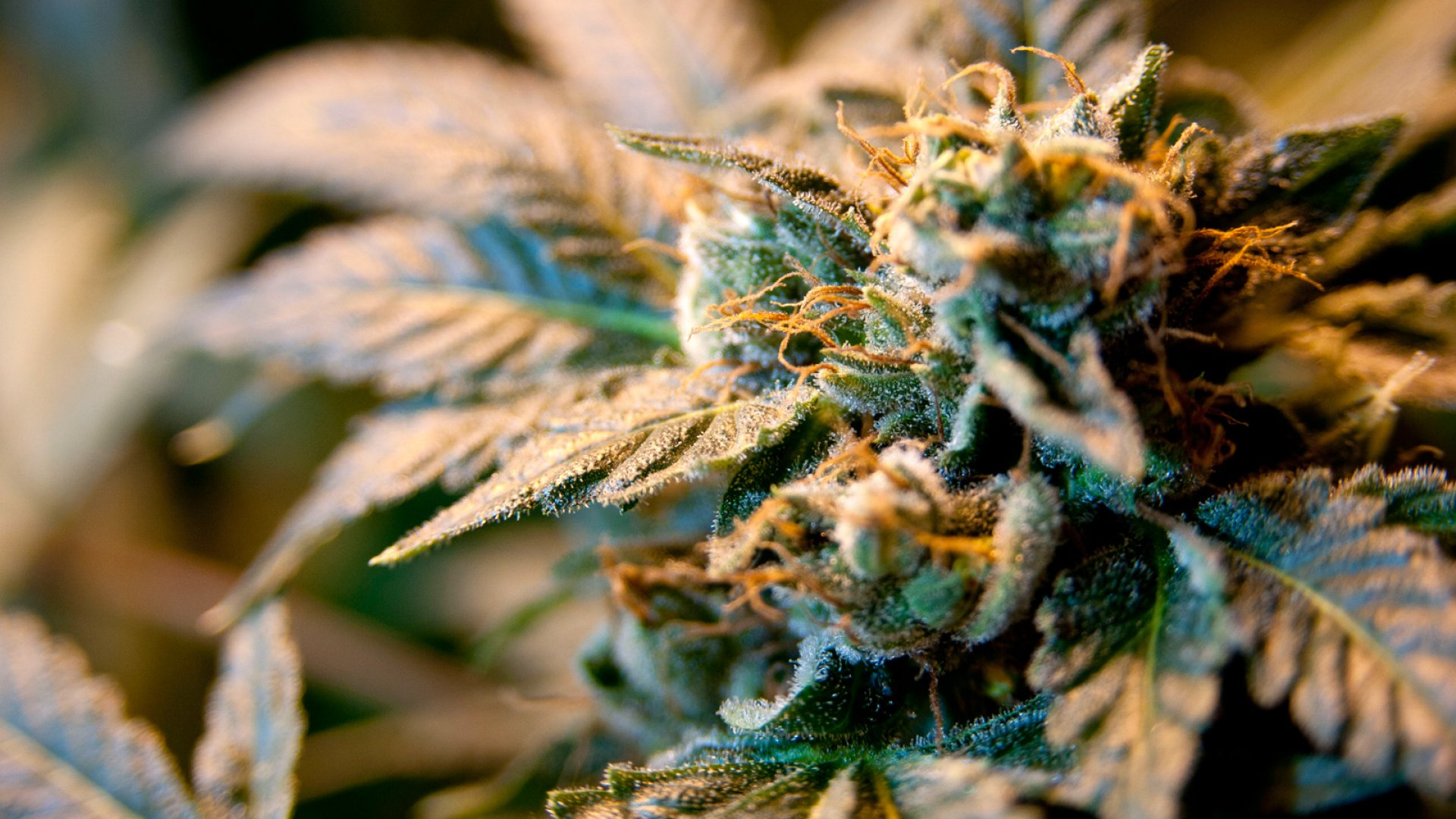 How CBS Shut Down an Ad From a Small Marijuana Company