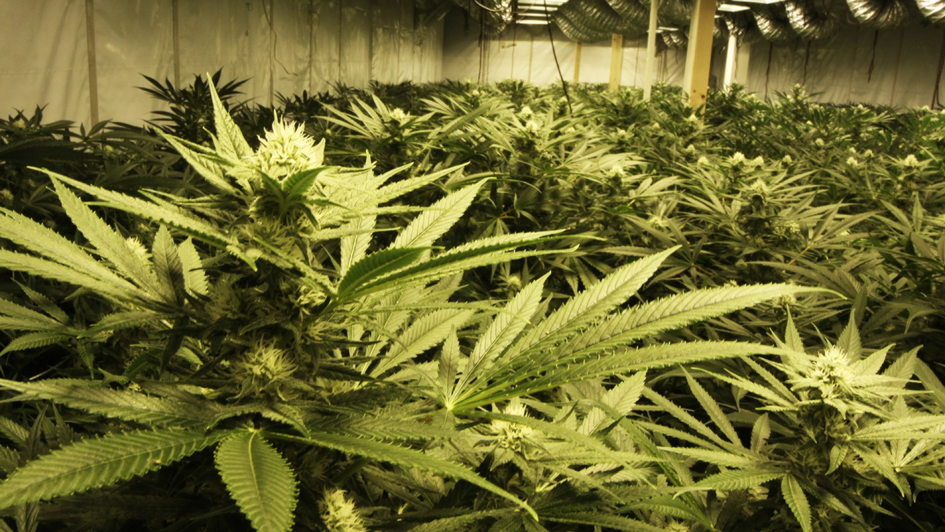 Growing Up With the Harvest: Oregon Pot Entrepreneur Ready for the Legal Market