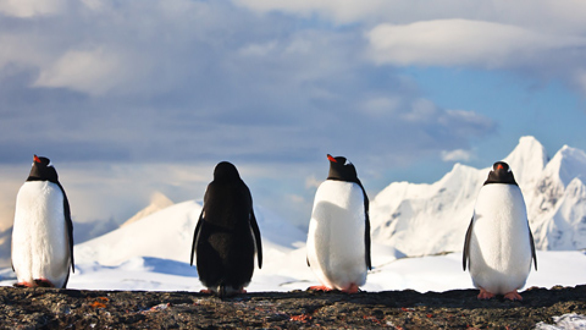 What You Need to Know About Google's Penguin Update
