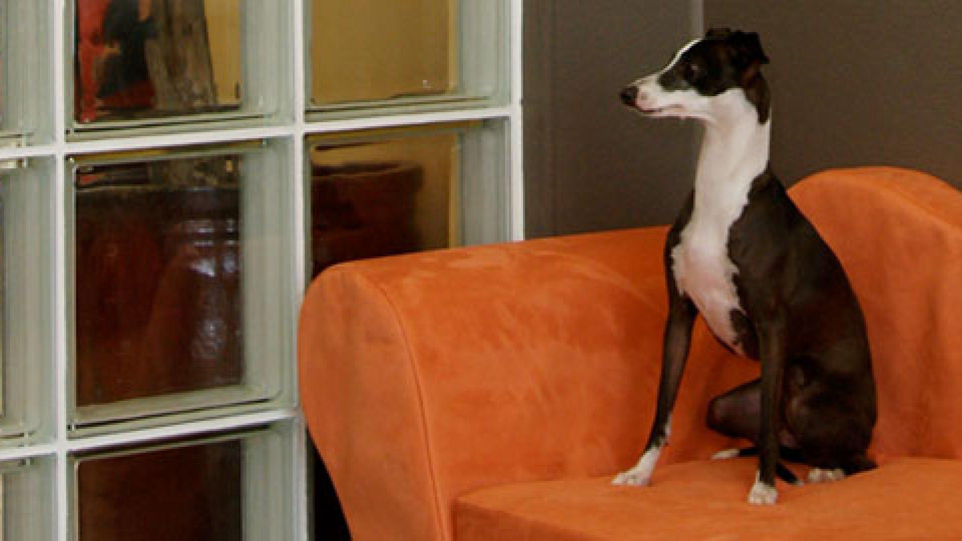Barkingham Palace: Cashing In on Luxury Pet Care