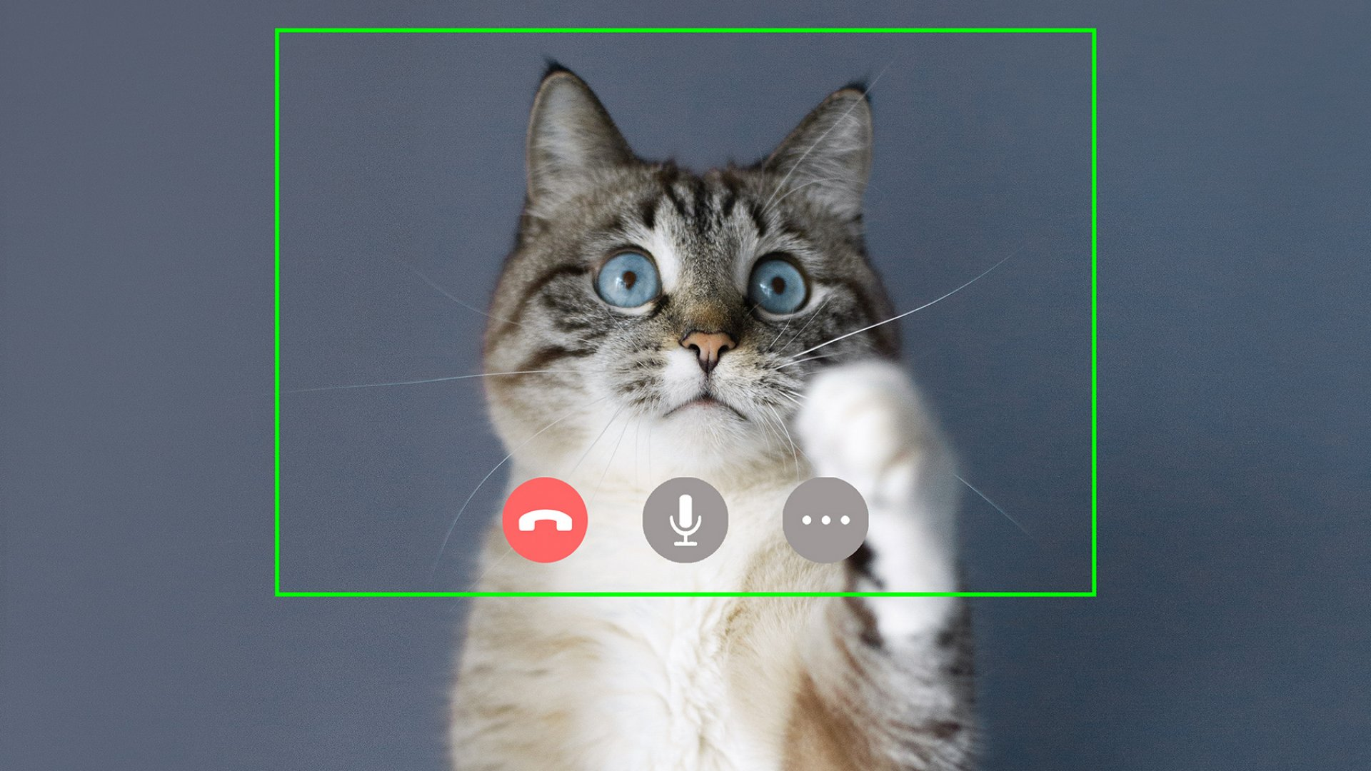 A Lawyer Who Appeared as a Kitten on Zoom Provides a Lesson in How to Handle Embarrassment