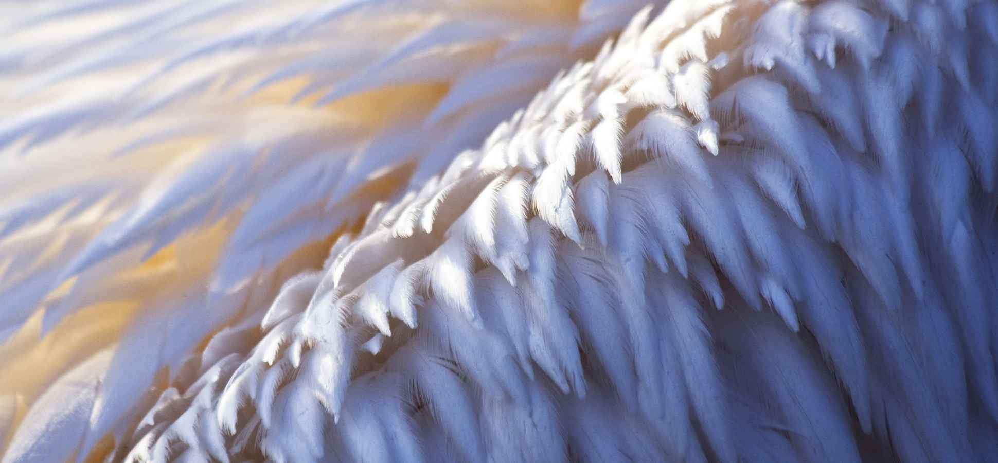 7 Things You Should Know About Angel Investors
