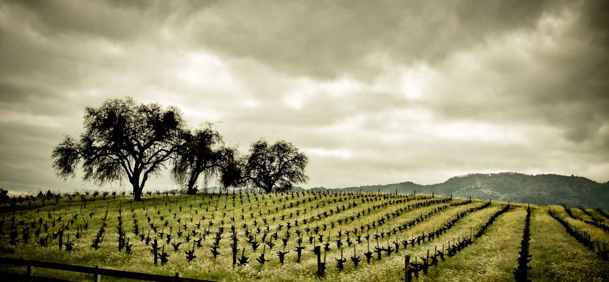 6 Things You Don't Know About Wine (and About Napa)