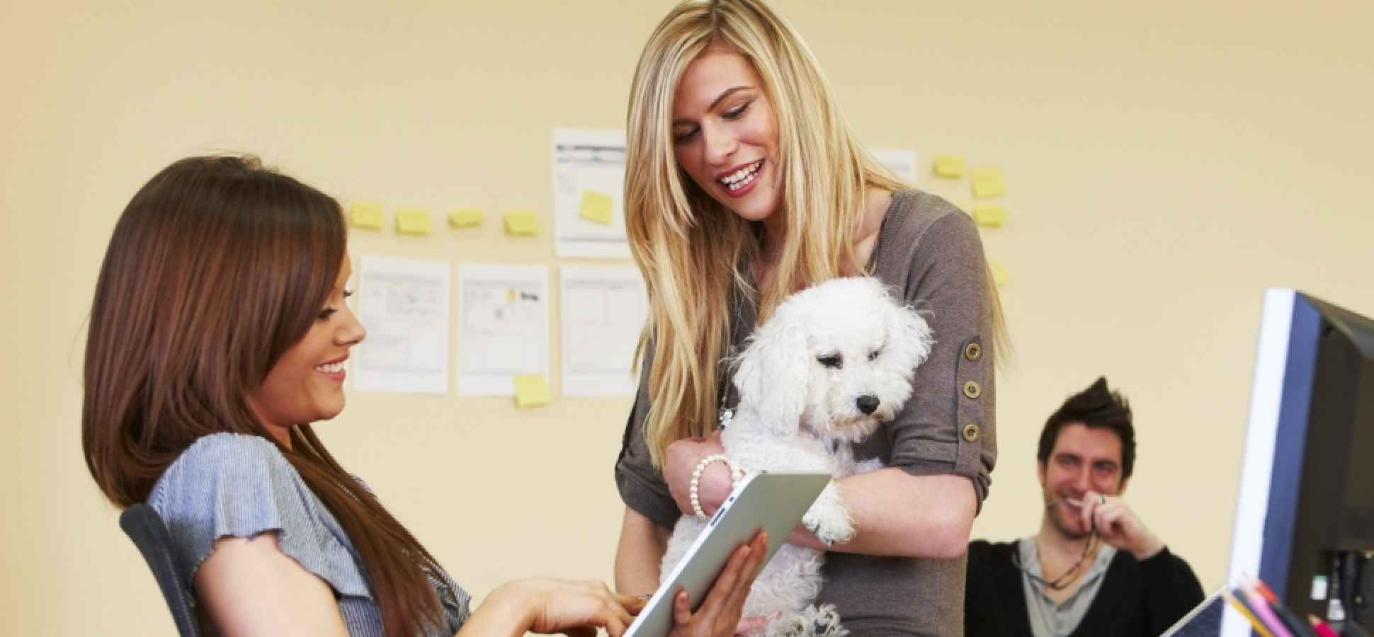 Want Happier Employees? 4 Reasons Why You Should Bring Pets to Work