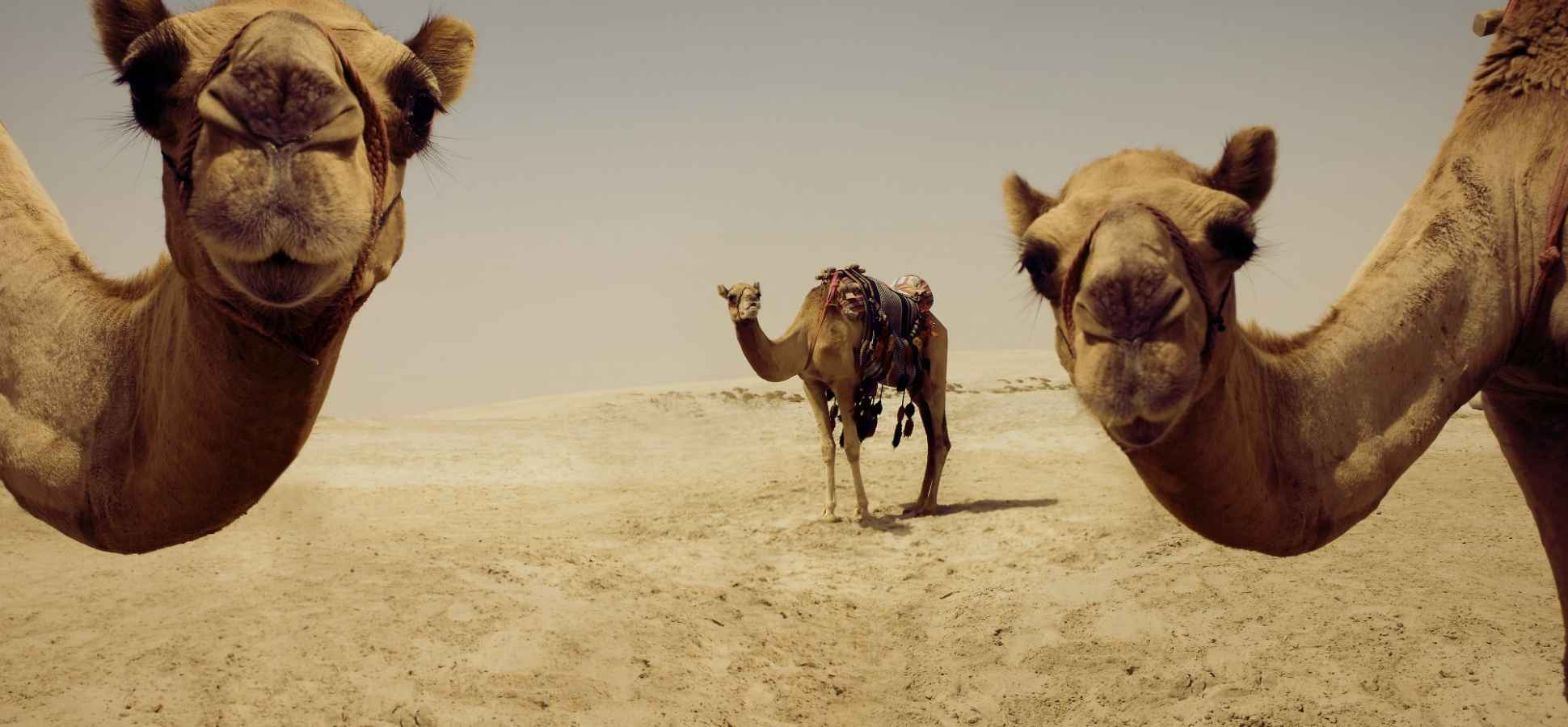 Procrastination, Bravery, and Camels: The Top 12 TED Talks of 2016