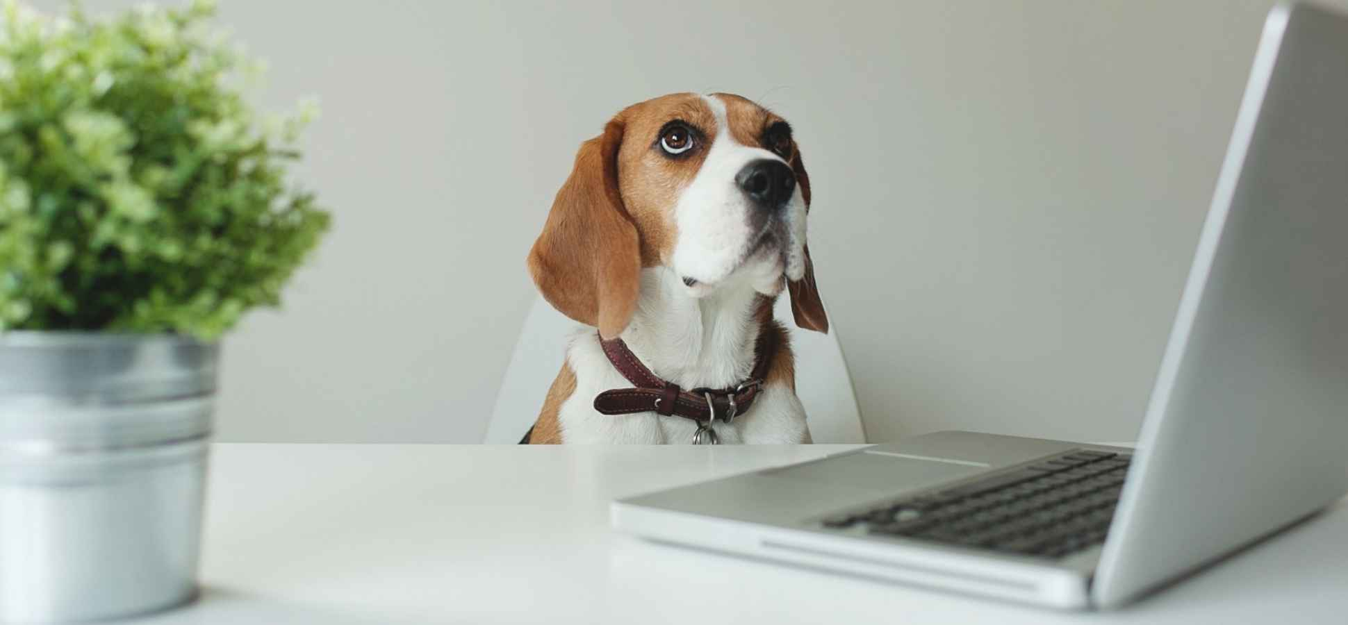 Canine Coworkers: Why More Companies Say Pet-Friendly Policies Are Good Business