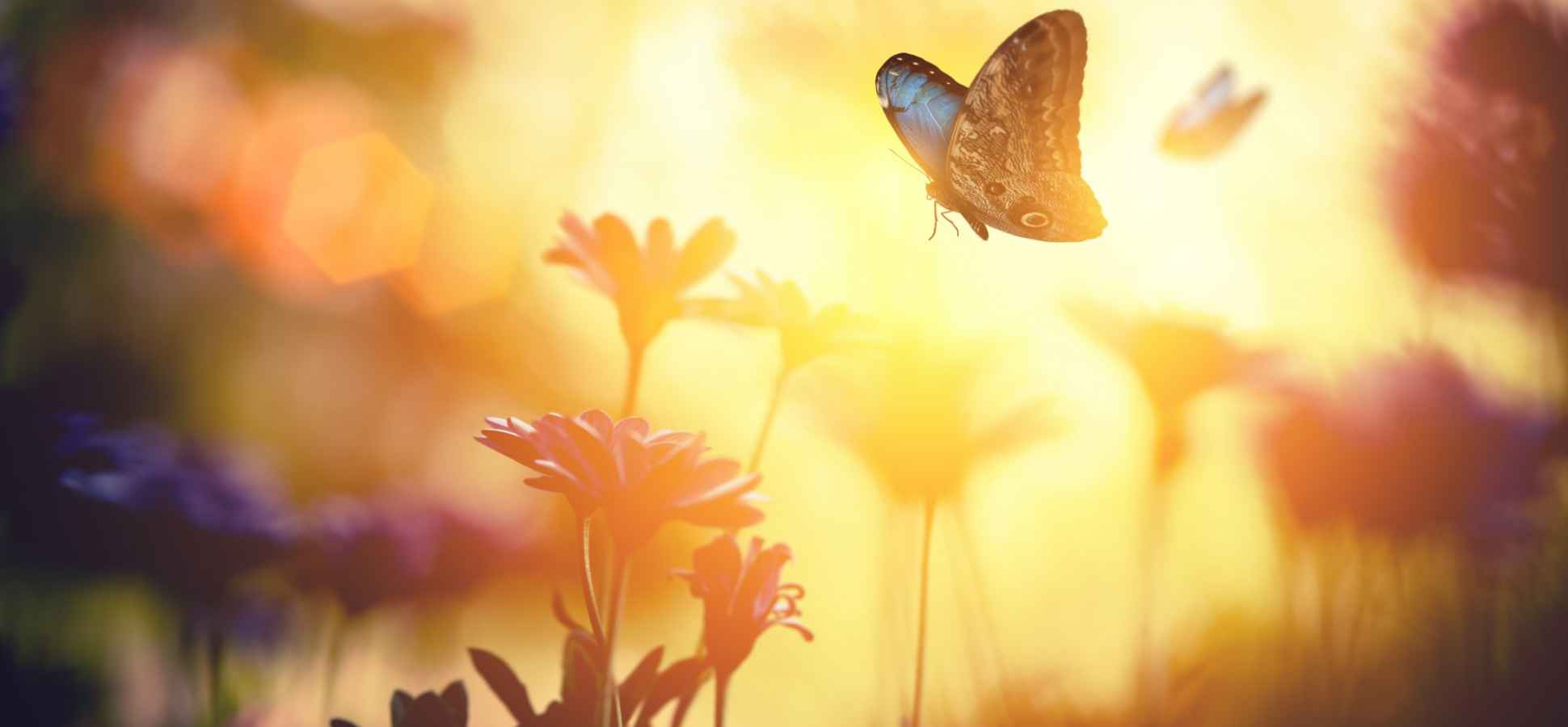 What Entrepreneurs And Butterflies Have In Common (This Might Make You Cry)