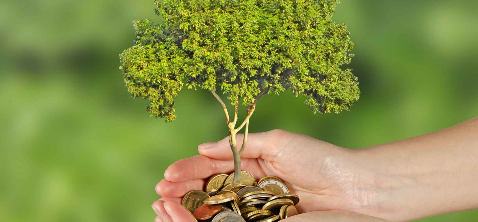 Why You Should Invest in the New Green Economy