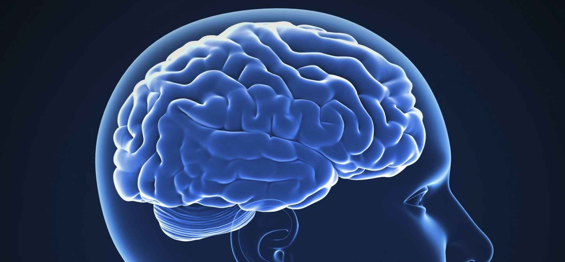 5 Things Smart People Know About Their Brains, According to a Neuroscientist