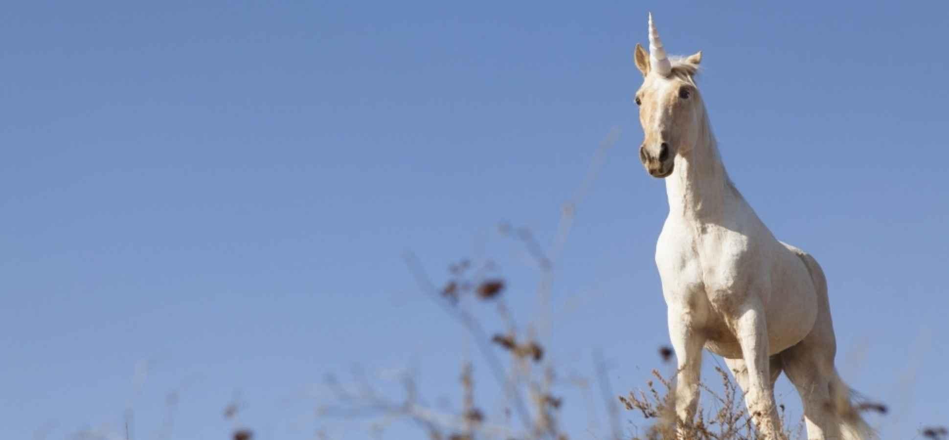 5 Secrets to Raising Money Like a Unicorn