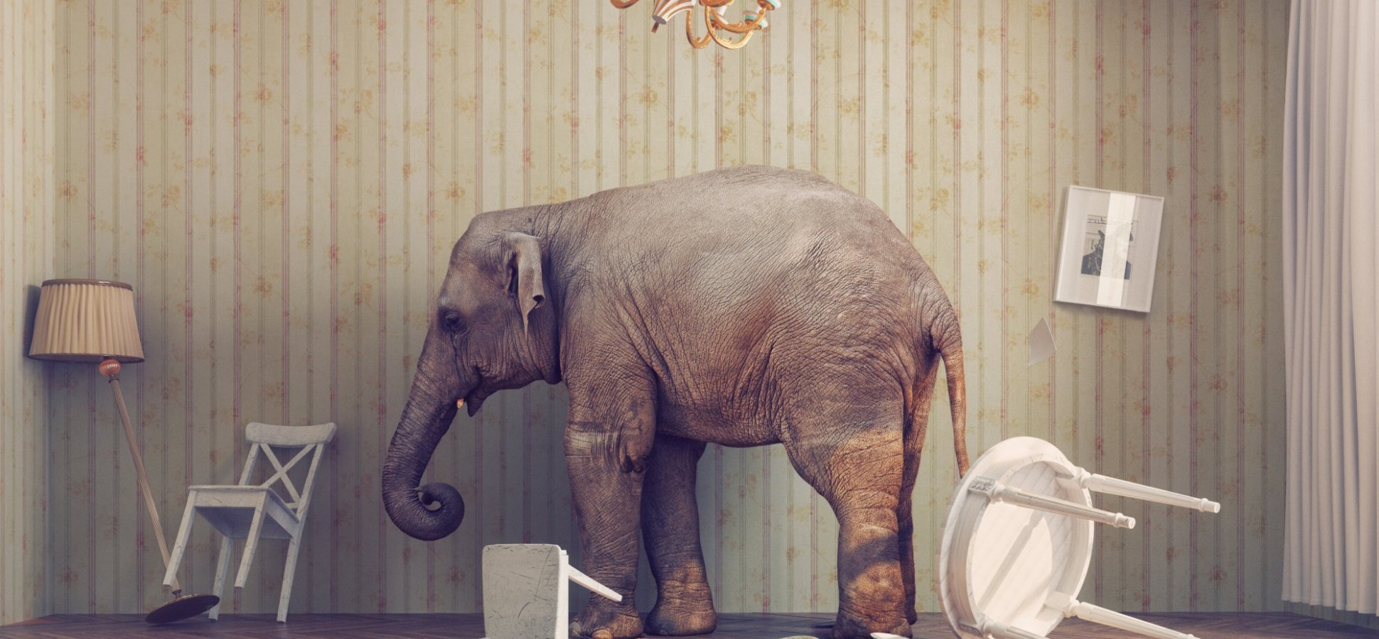How to Bring Up the Elephant in the Room Without Losing Your Courage (or Your Job)