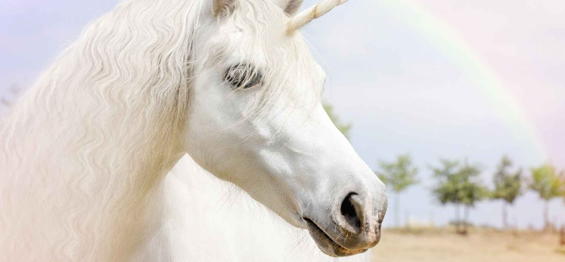 These Are the 4 Things That Make Unicorn Companies Worth $1 Billion