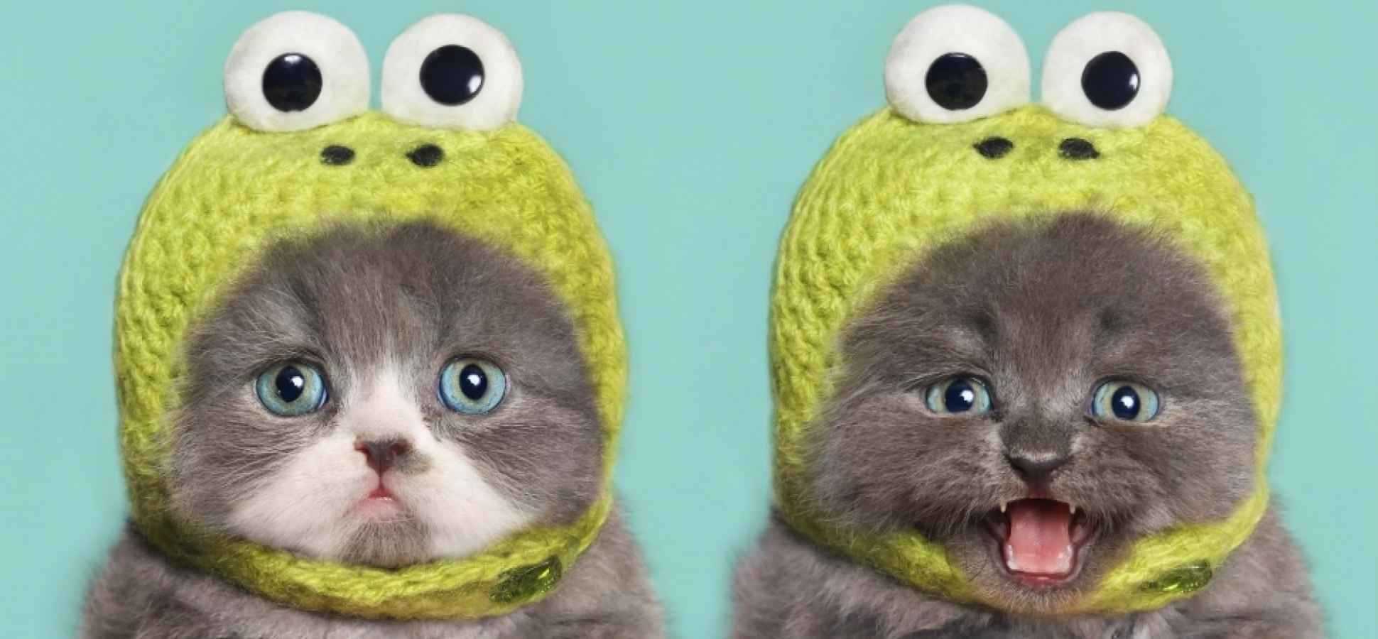 Science Says It's OK to Watch That Kitten Video at Work