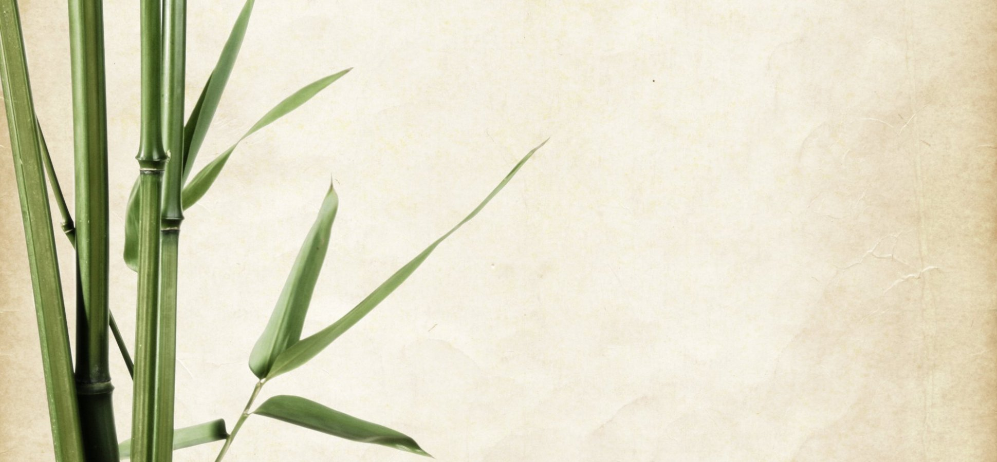 Thinking of Business Like a Bamboo Tree Can Help You Stay Motivated. Here's Why