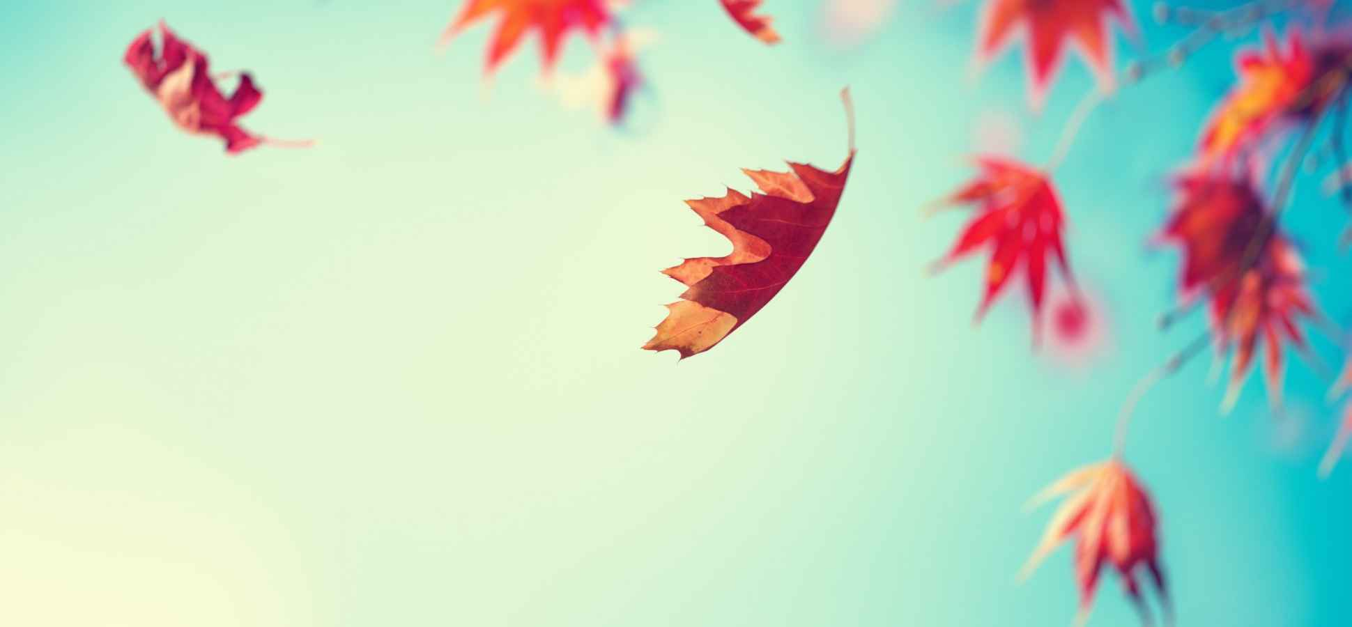 You Don't Just Need a Daily Routine. You Need a Seasonal Routine, Too
