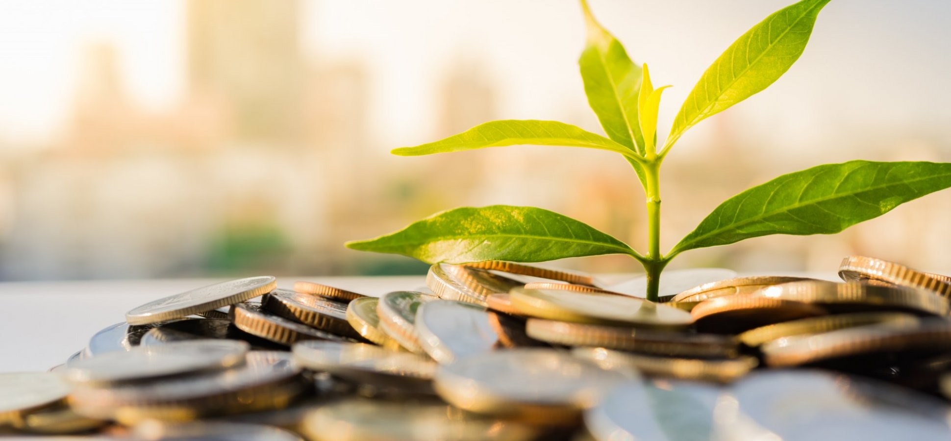 I'm an Investor, and This Is How I Decide Whether to Fund a Seed-Stage Deal