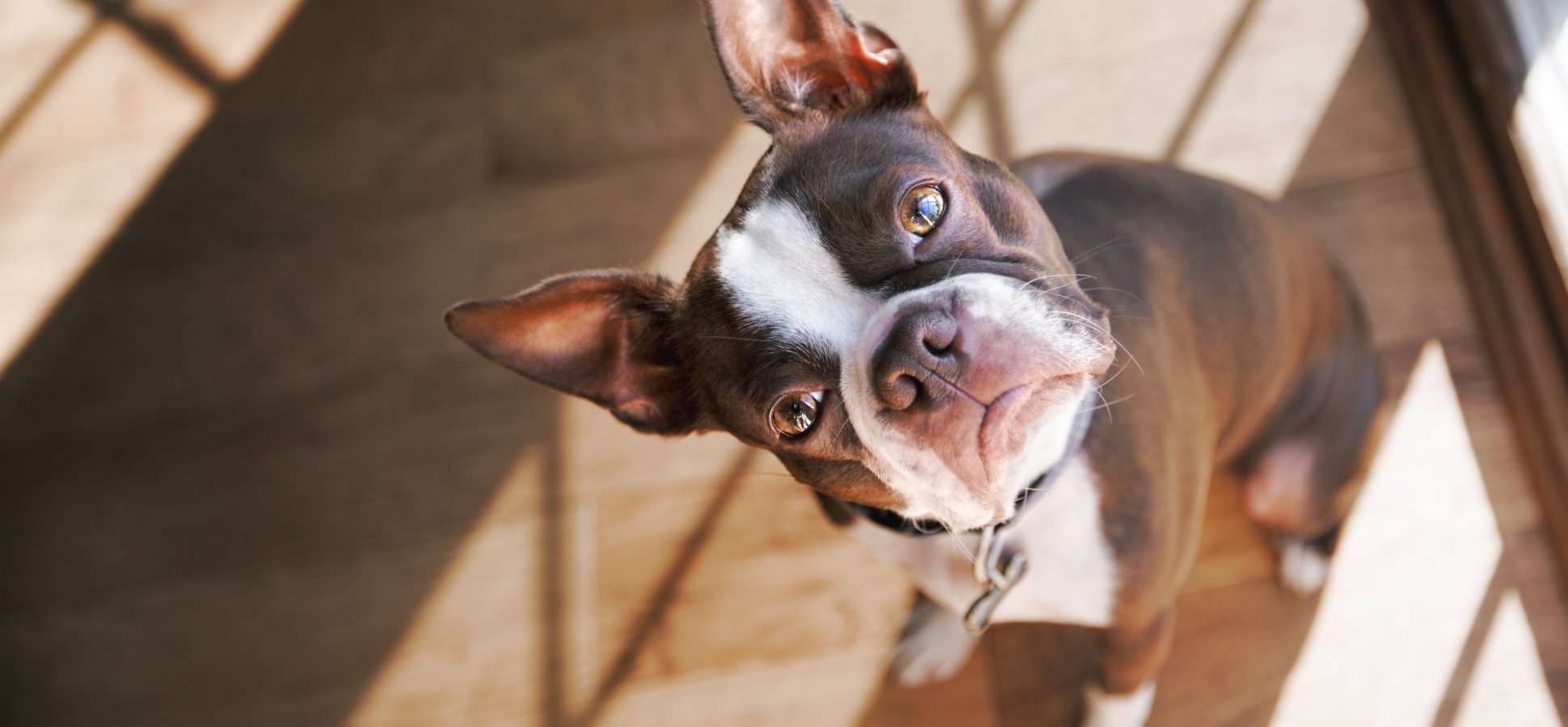Science: Talking to Your Dog Means You're Smart, Not Crazy