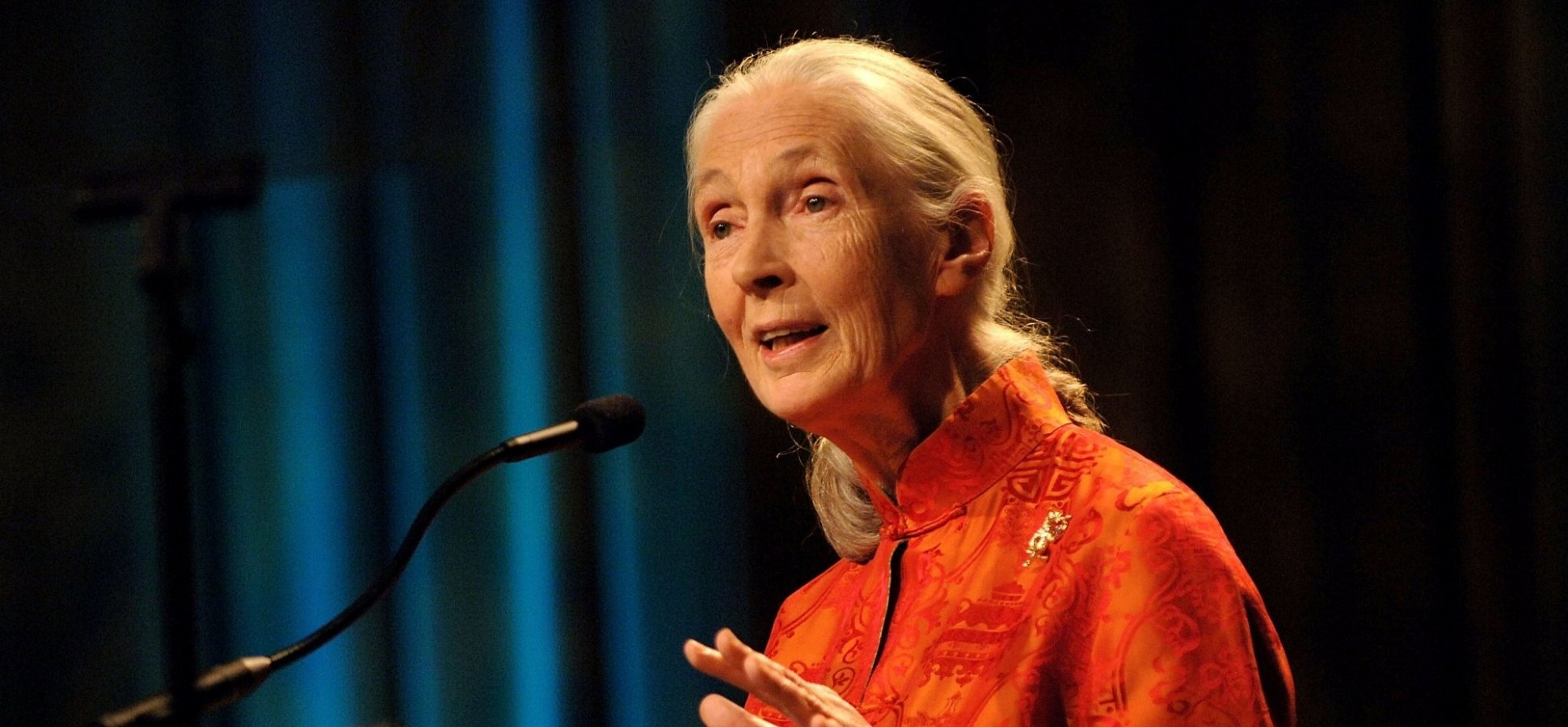 In a Single Sentence of her Google Doodle, Dr. Jane Goodall Teaches a Life Lesson We All Need to Learn
