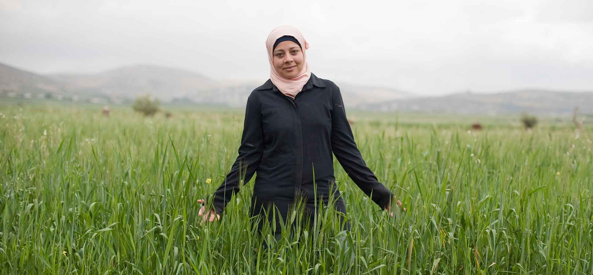Business Lessons from a West Bank Sheep Farm
