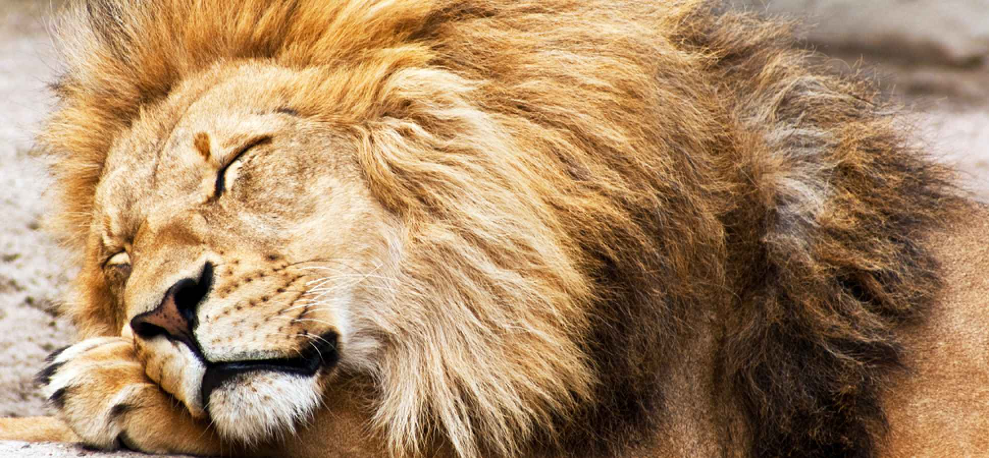 3 Ways to Be a Lion in Business and in Life