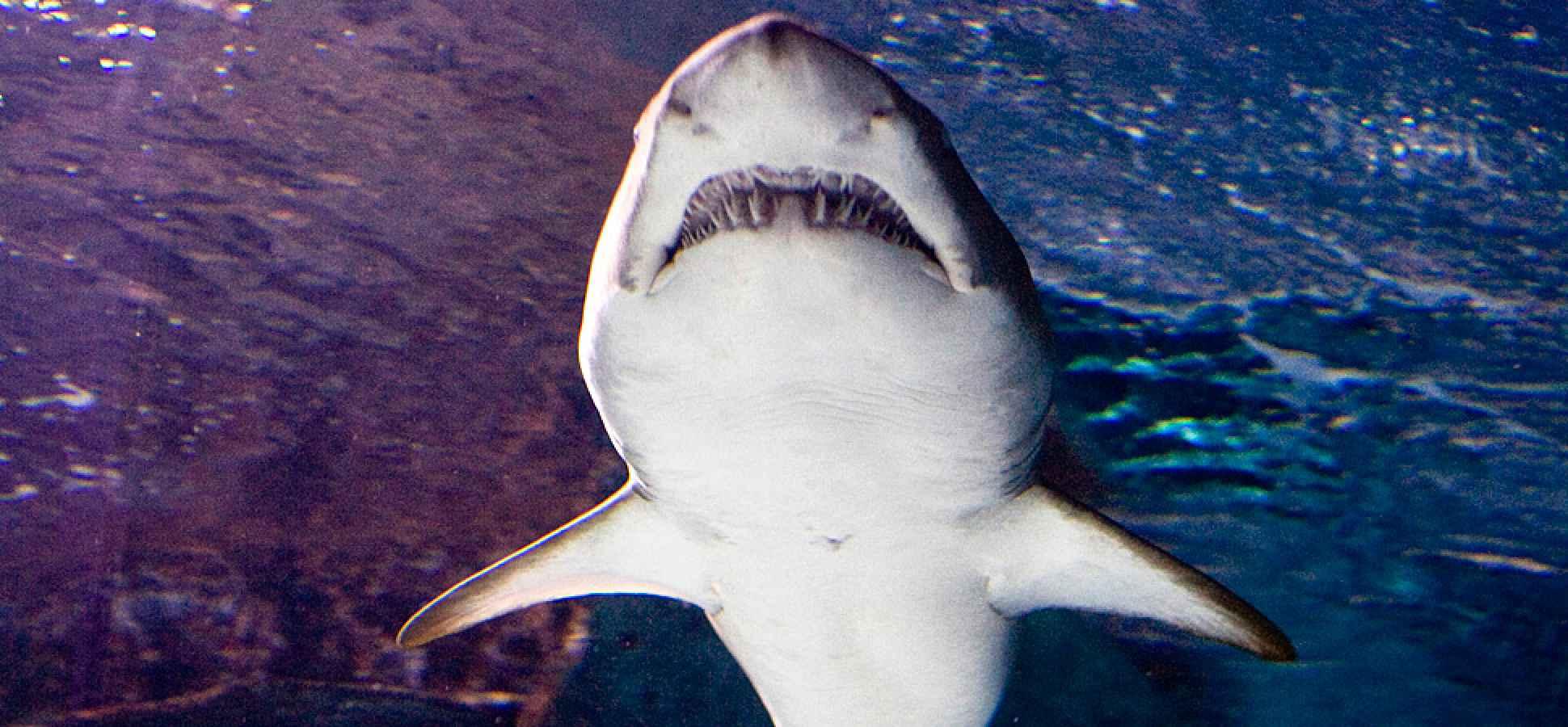 how to find killer ideas  shark