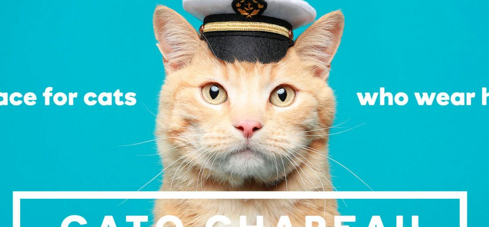 Why Cats Might Be the Key to Your Marketing Strategy