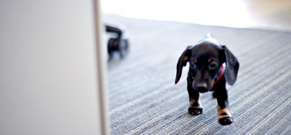 But Is it Legal? Dogs in the Office | Inc com