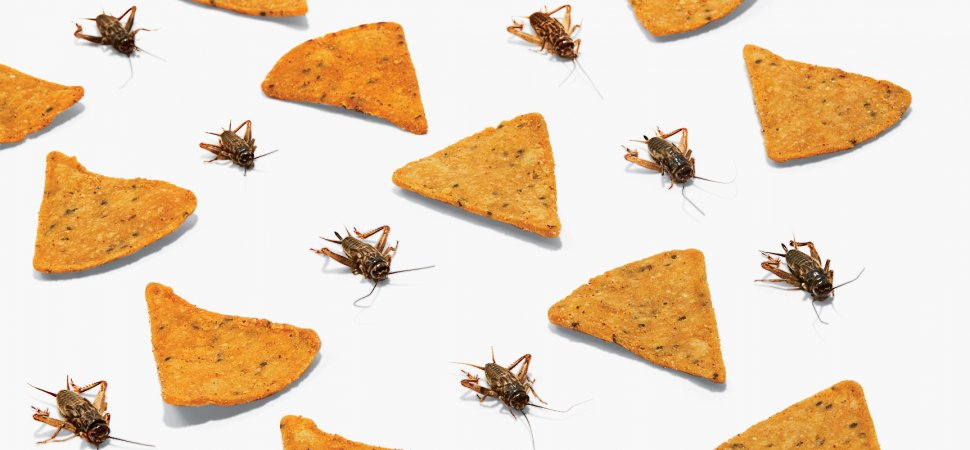 Other Countries Enjoy Eating Bugs as Snacks. These 2 Harvard Grads Want to Make Them a Thing in America