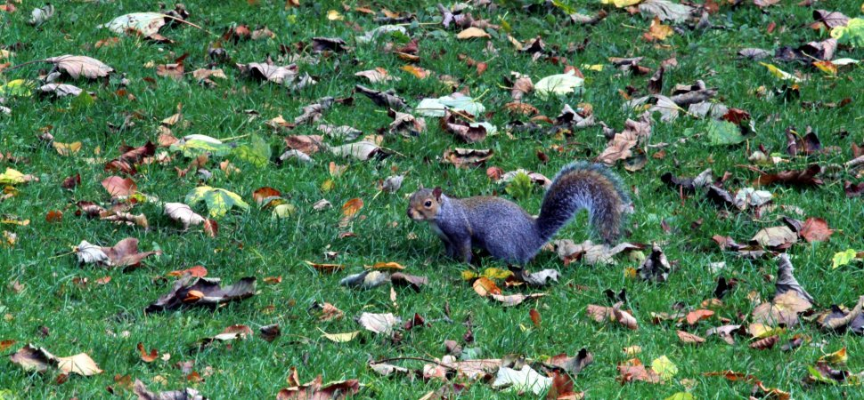Why Every Job Seeker Should Strive to be a 'Purple Squirrel' in 2019