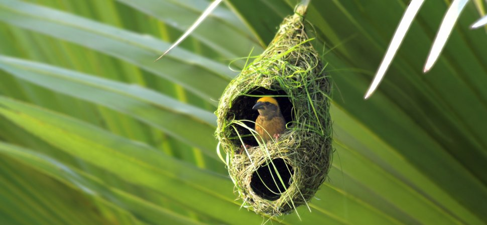 This Brilliant Hammock Design Was Inspired By A Bird S Nest Inc Com