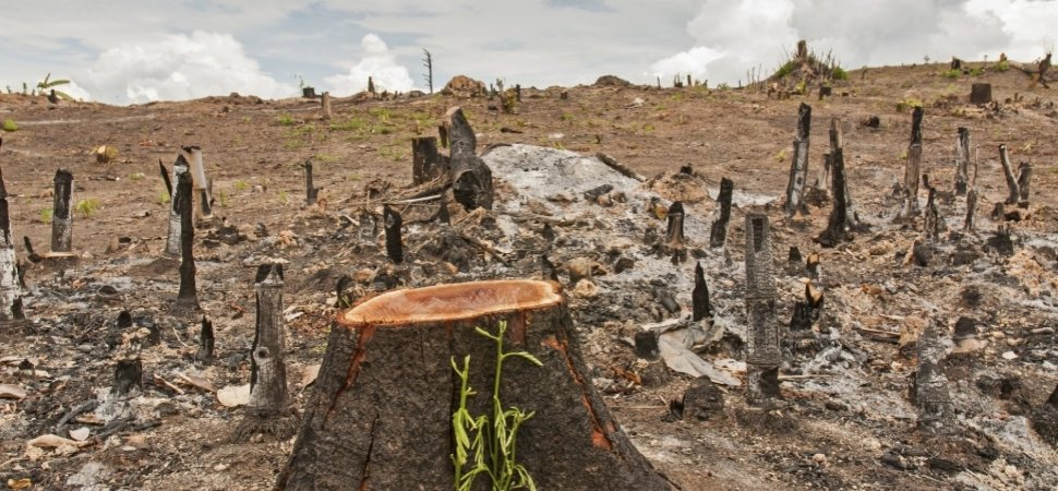 philippines deforestation solutions