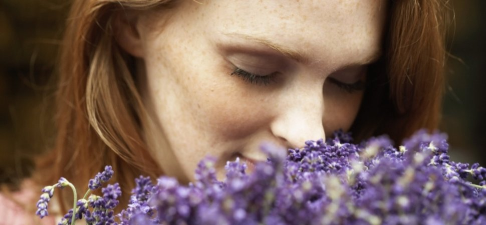can you smell your way to a better brain  science says yes