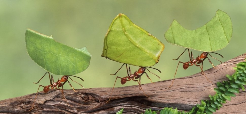Strangely Enough, You Can Learn Some Incredible Leadership Lessons From Fire Ants