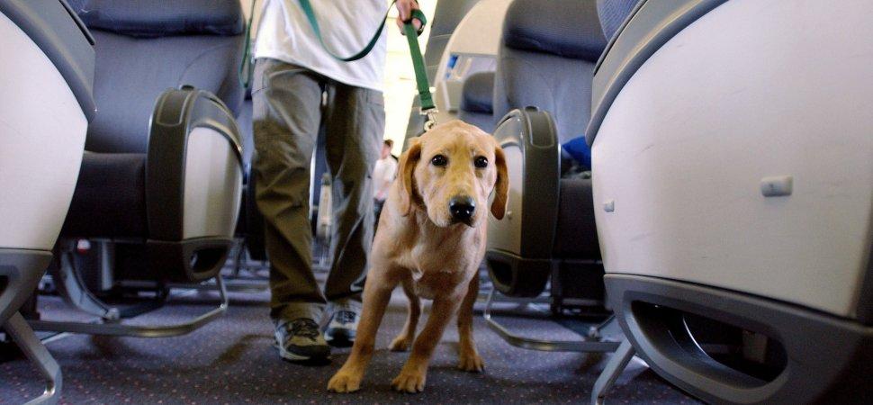 Delta Service Dog Mauls Passenger