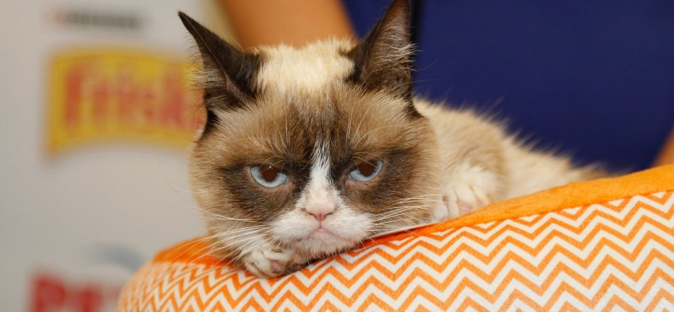 Lessons on Going Viral From Grumpy Cat, the Internet Sensation That Died at 7 Years Old