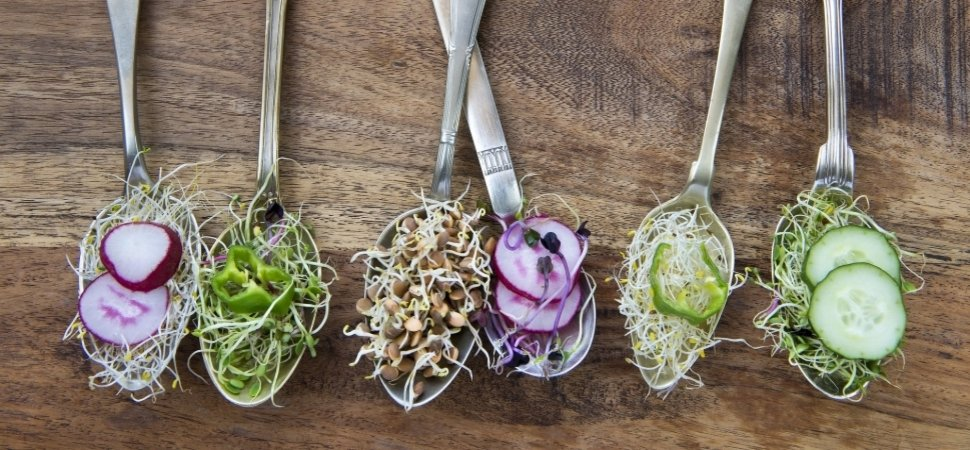 Powerplant Ventures Closes Debut Fund To Invest In Plant Based Food