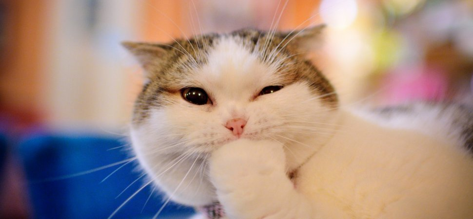 what your love of funny cat videos says about your personality
