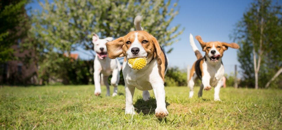 Use the Puppy Dog Test to Plan Your Next Career Move