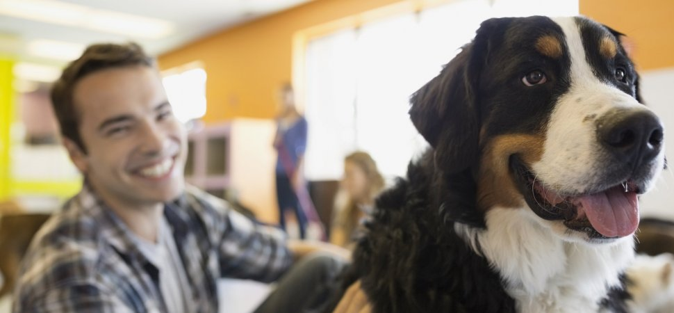 6 Reasons Why Allowing Your Dog to Come to Work Makes