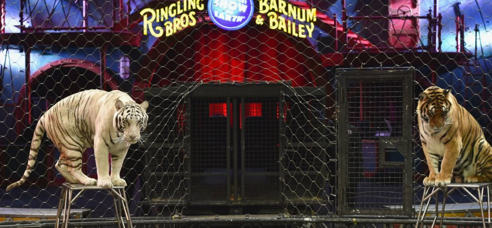 Technology Couldn't Save Ringling Bros  Circus | Inc com