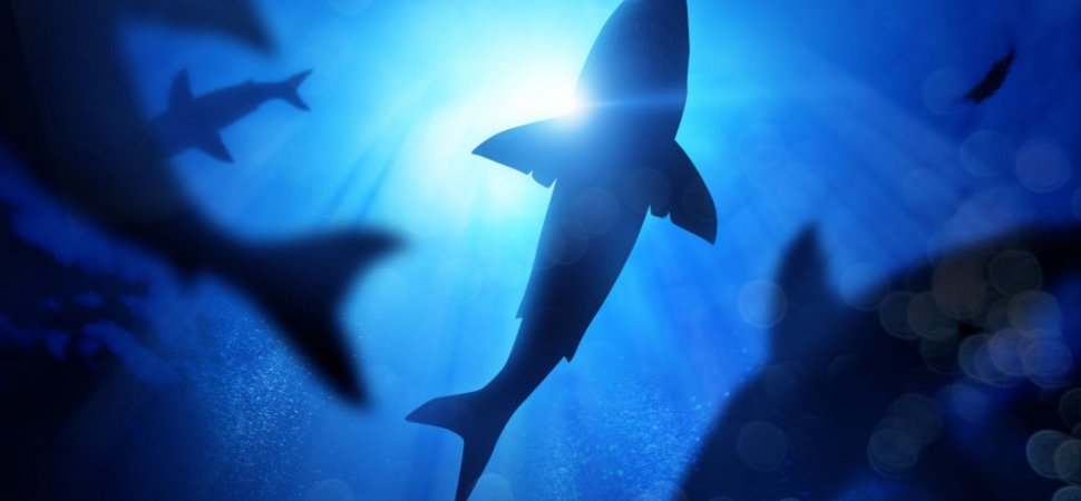 How to Decide Whether to Fish for Sharks or Hunt for Angels image