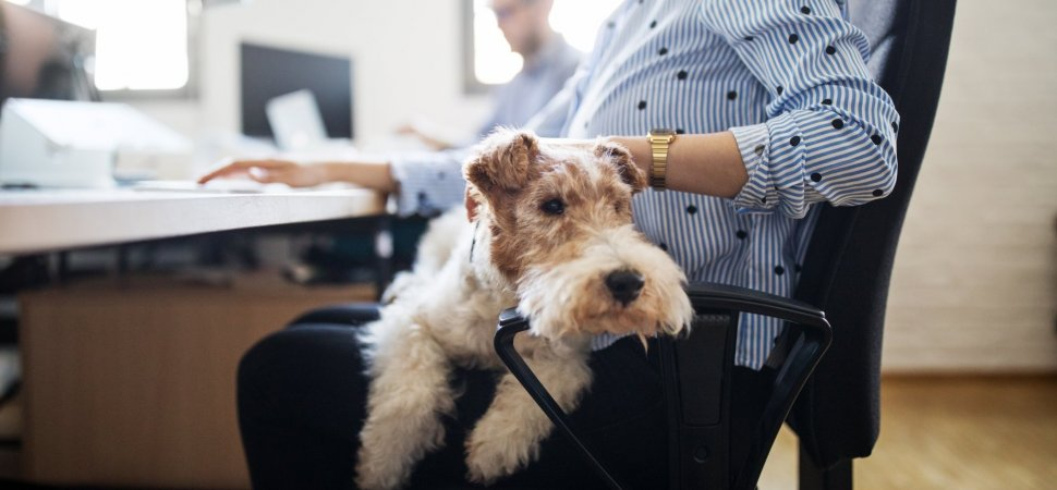 Check Out the Lavish Pet Perks at America's 12 Most Dog-Friendly Companies