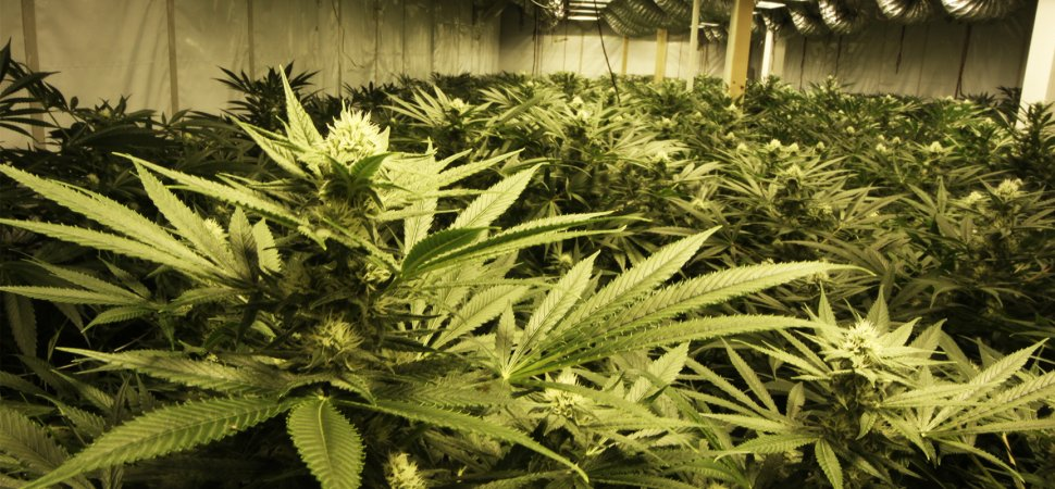 Growing Up With the Harvest: Oregon Pot Entrepreneur Ready