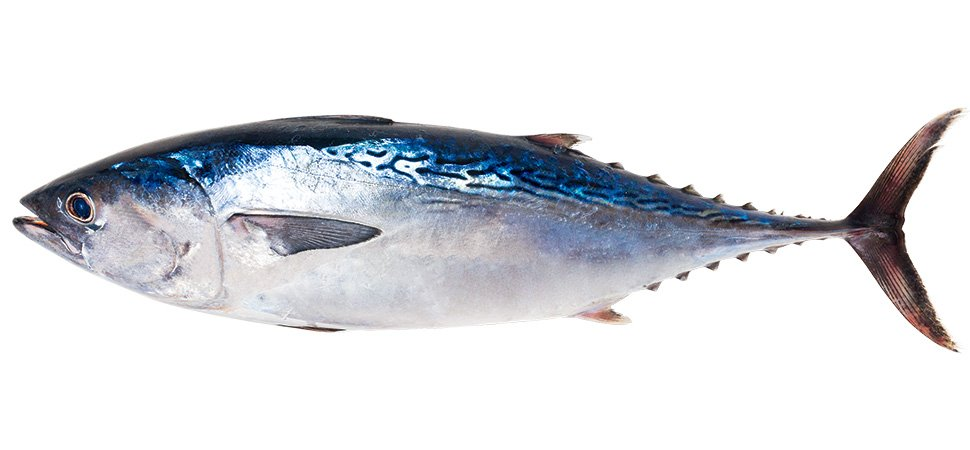 How safe catch is building a better can of tuna for Is tuna fish good for you